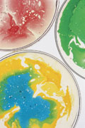 Three very colorful petri dishes.